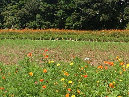 Jardines Hama Rikyu: photo1.jpg