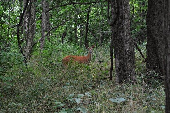 Mossville, إلينوي: Robinson Park