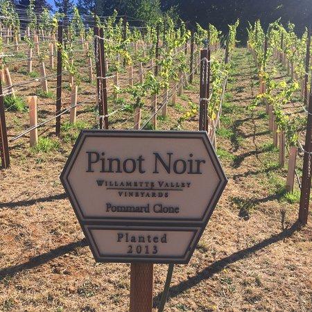 Turner, Oregón: Pinot Noir