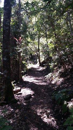 Canungra, Australia: Chemin de balade