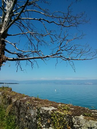 Anthy-sur-Leman, France : Corzent tranquille au bord du Léman