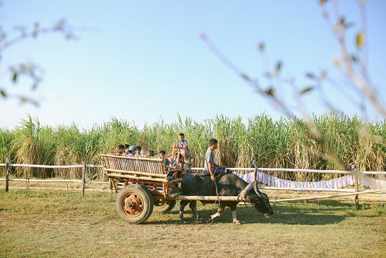 Talisay City, Filippinerna: Karabao cart ride