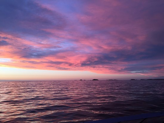 Will Wagstaff's Tours: Fantastic Shearwater trip into the sunset last night!