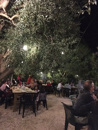 Agriturismo Osteria Pane e vino: Gli ulivi