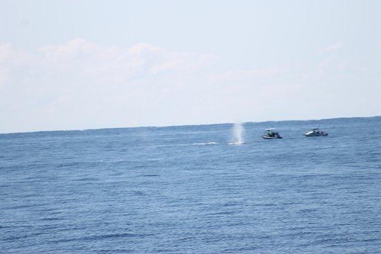 Main Beach, Australien: one big whale spout