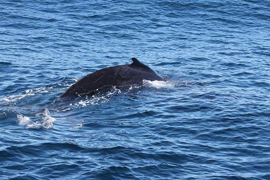 Main Beach, Australien: found the whale