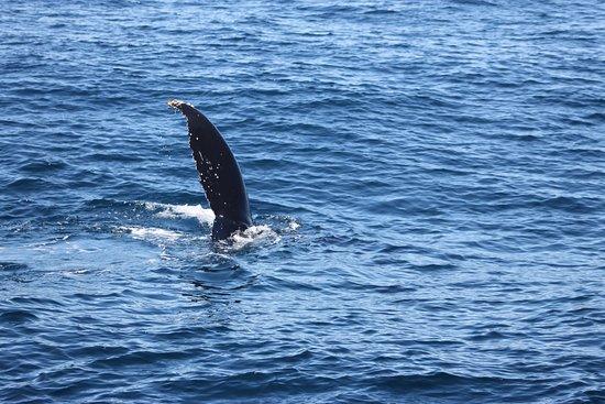 เมนบีช, ออสเตรเลีย: more tail