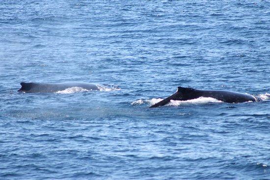 Main Beach, Australia: whales