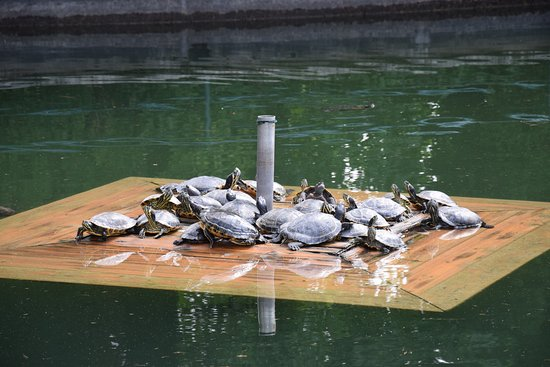 Laghetto delle tartarughe picture of parco giardino for Laghetto per tartarughe acquatiche