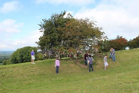 County Meath, Irland: дерево желаний