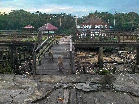 Pulau Kembang Foto Pulau Kembang Banjarmasin Tripadvisor