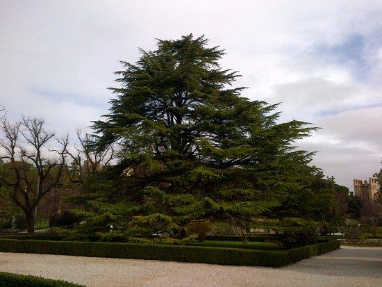 Pianta giardini Castello di Este