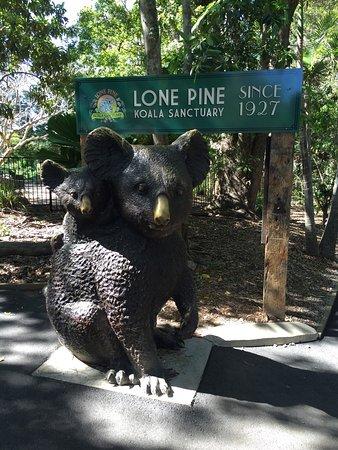 Worth to visit for koala and kangaroo feeding