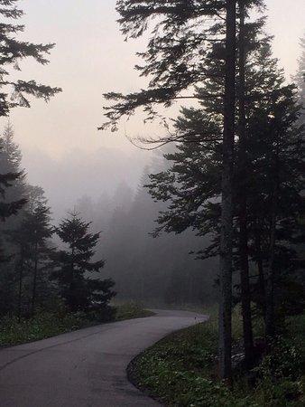 Skhodnitsa, Ukraina: Утро. Дорога из отеля в лес к отелю 4****.
