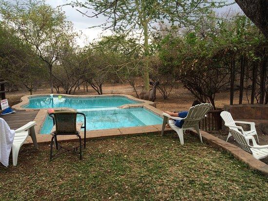 Marloth Park, جنوب أفريقيا: photo0.jpg