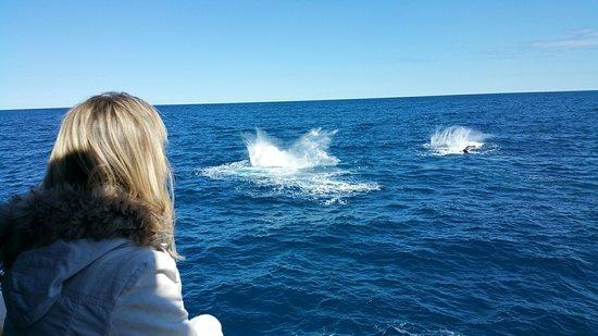 Urangan, ออสเตรเลีย: Whales galore!