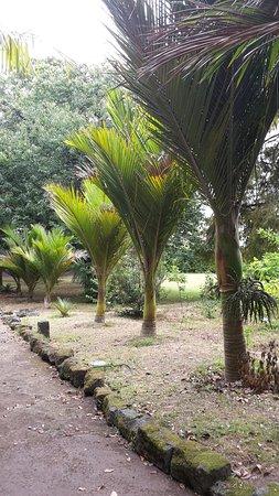 Jardim Jose do Canto: 20160815_120440_large.jpg