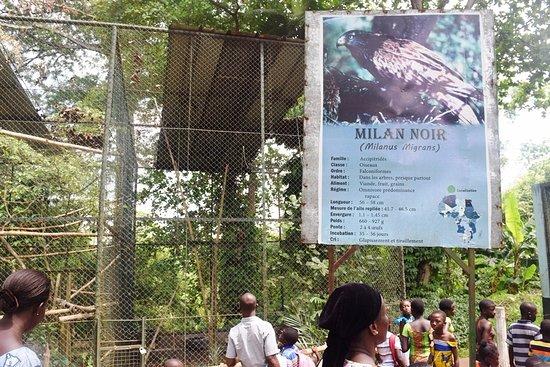 Región de Lagunes, Costa de Marfil: Big bird cage