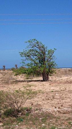 Baobab Tour Private Tours : Tourbilder von Baobab