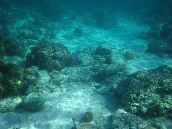 Derawan Islands, Endonezya: the coral