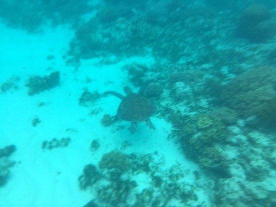 Reef Daytripper : photo2.jpg