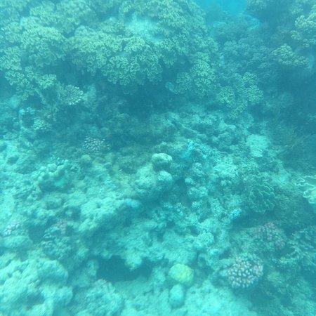 Reef Daytripper : photo3.jpg