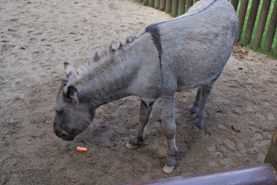 Эберсвальде, Германия: można pokarmić osły, konie