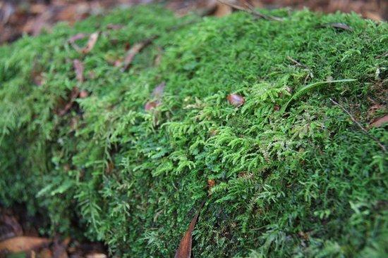 St Helens, Australia: moss
