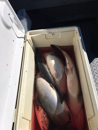 Soldotna, AK: Part of our Catch