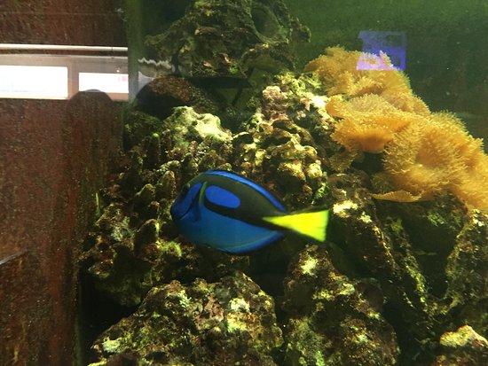 Public Aquarium of Brussels: photo0.jpg