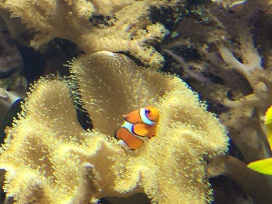 Public Aquarium of Brussels: photo1.jpg