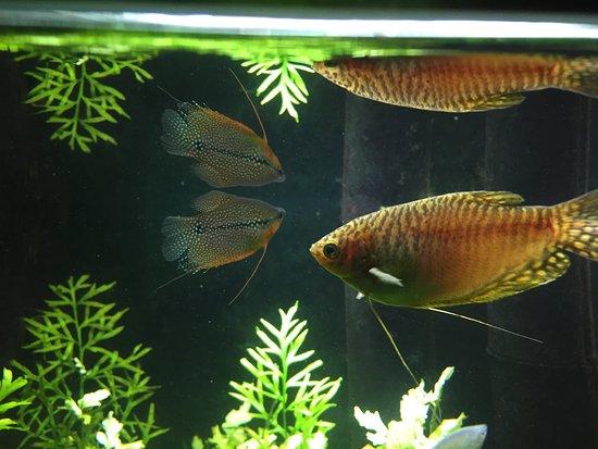 Public Aquarium of Brussels: photo2.jpg