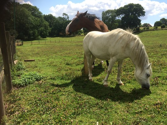 Dedham, UK: Thomas and Dinky, equine residents