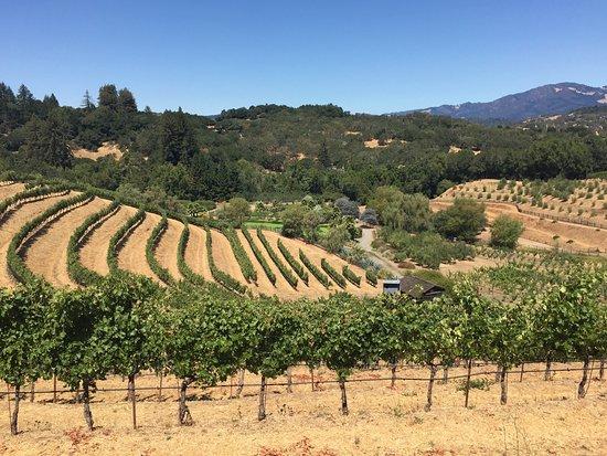 Glen Ellen, CA: photo2.jpg