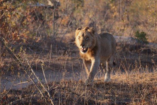 Londolozi Private Game Reserve: photo6.jpg
