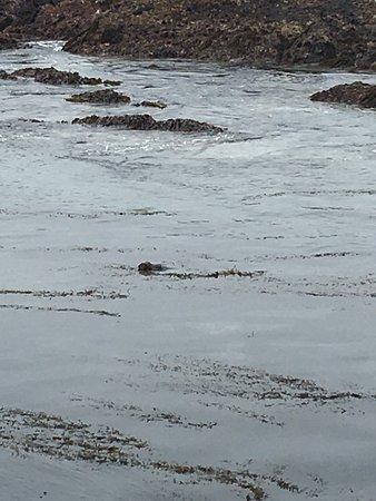 Point Lobos State Reserve: photo3.jpg