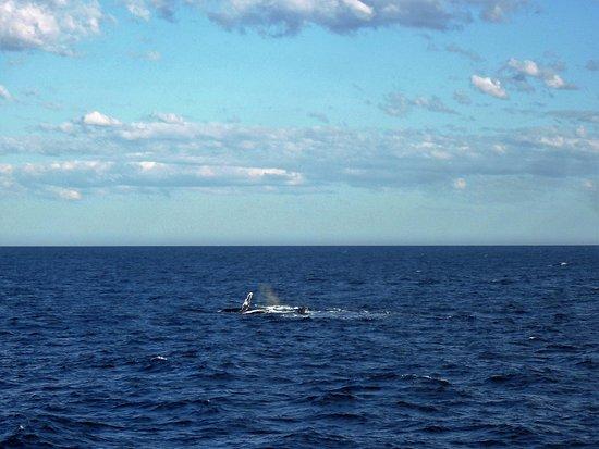 Manly, Australia: Whale!