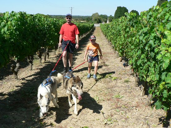 Zachodnia Dolina Loary, Francja: Cani-rando vignes et troglos