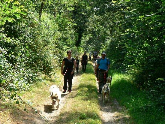 Maine et Loire, Frankrig: Parcours en forêt