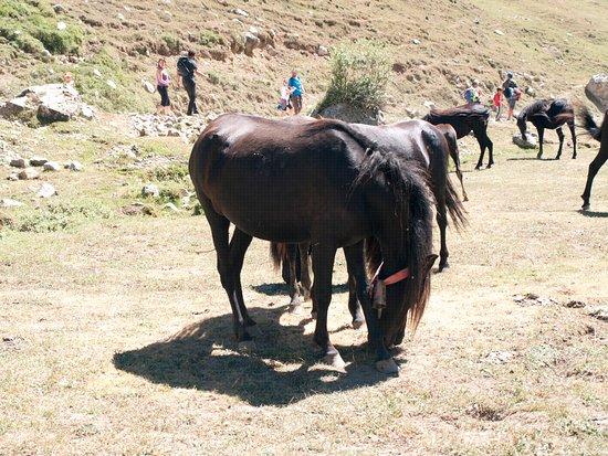 Camaleno, Spagna: Ruta, encontrarse caballos, ovejas etc por ella es lo mas normal