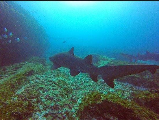 Umkomaas, Afrique du Sud : Sharks!