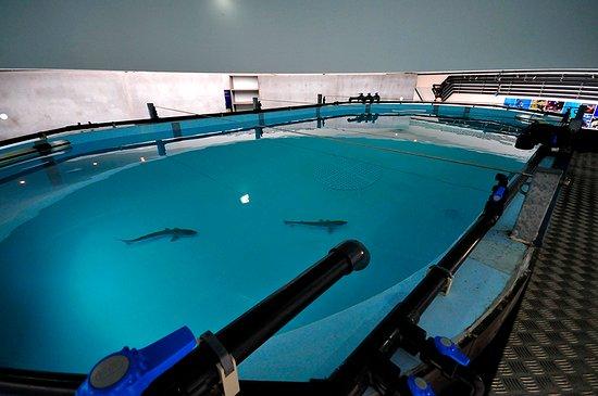 Life Fish Station - Porto Pim Aquarium