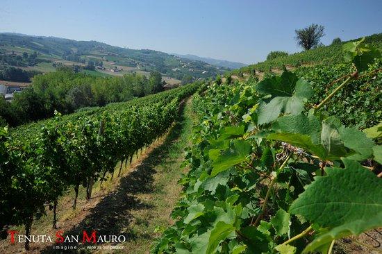 Кастаньоле-Ланце, Италия: Passeggiando tra i filari