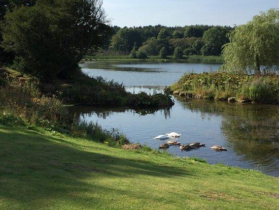 Sedgefield, UK: photo2.jpg