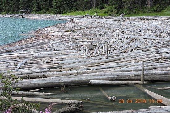 Pemberton, Canada: 山下沖下來的樹木