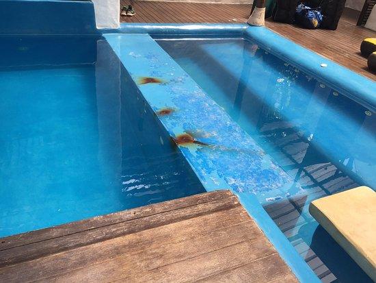 โรงแรมเกาะเต่า คาบาน่า: photo5.jpg
