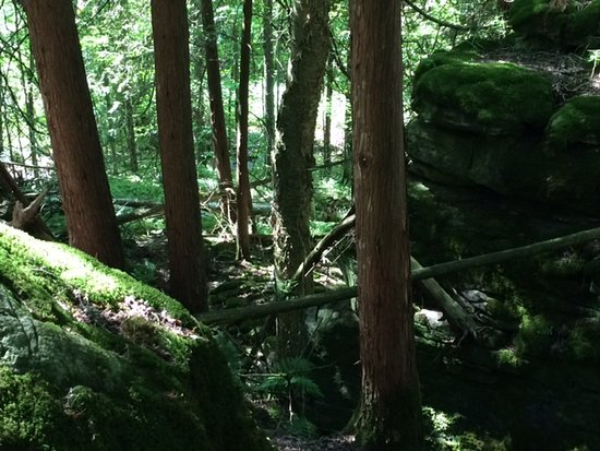 Walters Falls, Canada: Moss covered rocks on Bruce Trail