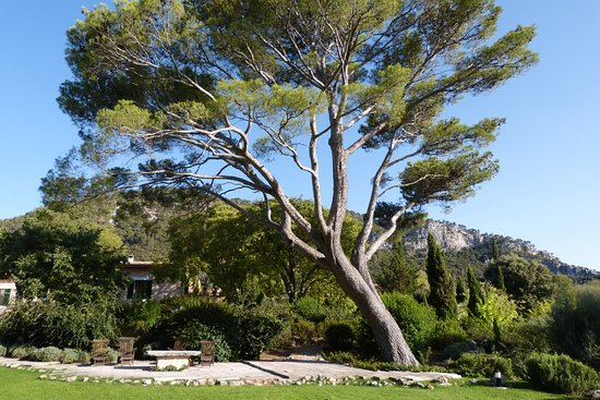 Finca Hotel Son Palou: Sit under the tree with a glass of wine