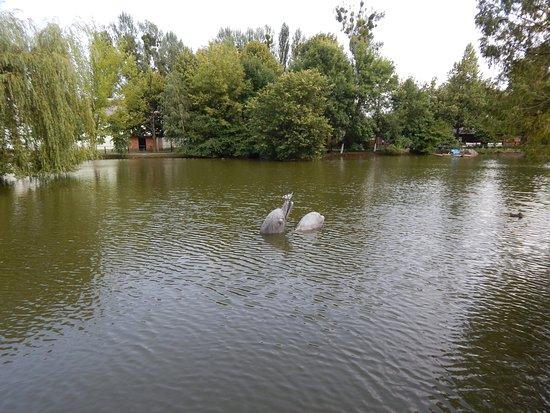Lutsk, أوكرانيا: Зоопарк