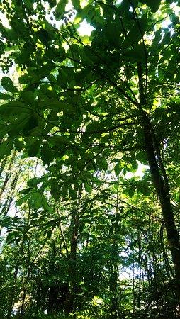 Chabanais, Francia: Arboretum